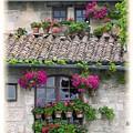 Flower Pots In Windows In Arles by Carson Ganci