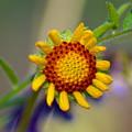 Flower Power by Ben Upham III