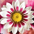Flower Power by Brenda Lawlor