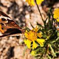 Flower Power Bug And Butterfly by Gary Adkins