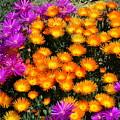 Flower Power by Carla Parris