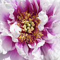 Flower Power In Pink by Paula Joy Welter