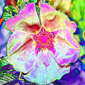 Flower Power by Janet Pugh