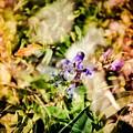 Flower Power  by Jikaiah Stevens