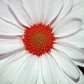 Flower Power by Teresa Blanton