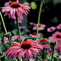 Flower Power by Tom Prendergast
