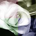 Flower Quadrant Colors by Lisa Stanley