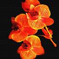 Flower by Ralph  Perdomo