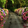 Flower Road by Svetlana Sewell