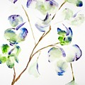 Flower  by Shelley Jones