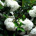 Flower Snow Balls by Valerie Ornstein