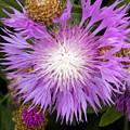 Flower Snowflake by William Tasker