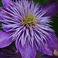 Flower Splash by Paul Slebodnick