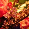 Flower Stem by Miss McLean