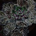 Flower by Suraj Laheru