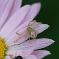 Flower Trap by Paul Slebodnick