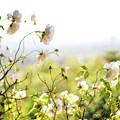 Flower Valley by Allison Weeks