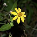Flower by Vivian Bird