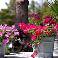 Flower Wagon by Susanne Van Hulst