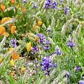 Flower Whispers by Erin Finnegan
