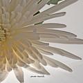 Flower-white by April Bielefeldt