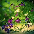 Flower by Zuska Madar
