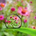 Flowerdrop by Debra White