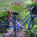 Flowered Bicycle by Dave Rennie