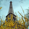 Flowered Eiffel Tower by Charles  Ridgway