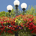 Flowered Lamppost by David Lee Thompson