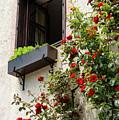 Flowered Window by Bob Phillips