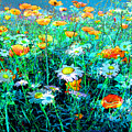 Flowerfield by Anne Weirich