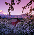 Flowering Apple Trees, Distant Barn by Panoramic Images