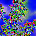 Flowering Brittle Bush In An Altered State by Richard Henne