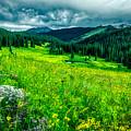 Flowering Colorado Mountain Meadow by Mountain Dreams