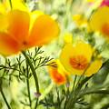 Flowering Garden by Gal Eitan