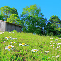 Flowering Hillside Meadow - View 2 by The American Shutterbug Society