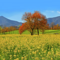 Flowering Meadow, Peaks Of Otter,  Virginia. by The American Shutterbug Society