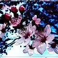 Flowering Of The Plum Tree 7 by Jean Bernard Roussilhe