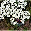 Flowering Of White Flowers 4 by Jean Bernard Roussilhe