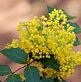 Flowering Plant 032514a by Edward Dobosh