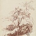 Flowering Plant With Buds by Jean-baptiste H?et, I