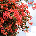 Flowering Tree by Nadine Rippelmeyer