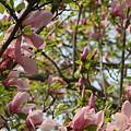 Flowering Tree by Rebecca Pavelka