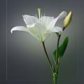 Flower..one by Deepak Pawar