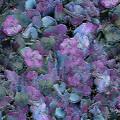 Flowers #061 by Barbara Tristan