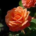 Flowers 112 by Joyce StJames