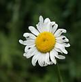 Flowers 14 by Nitin Kaul