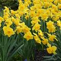 Flowers 146 by Joyce StJames