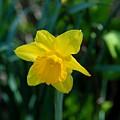 Flowers 147 by Joyce StJames